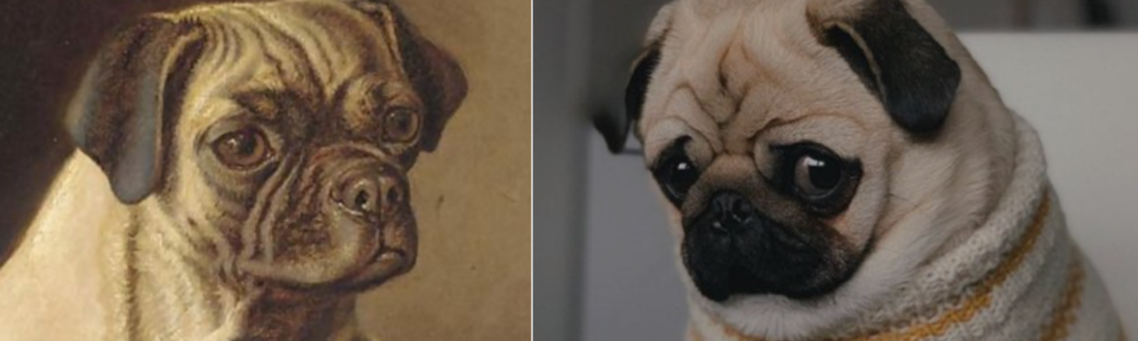 """Victorian vs. modern-day pug: Left [""""A Pug,"""" 1890 Horatio Henry Couldery (1832–1893) and Right [via dogtime.com]"""