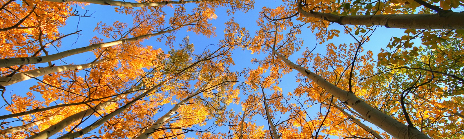 Canopy of trees in autumn