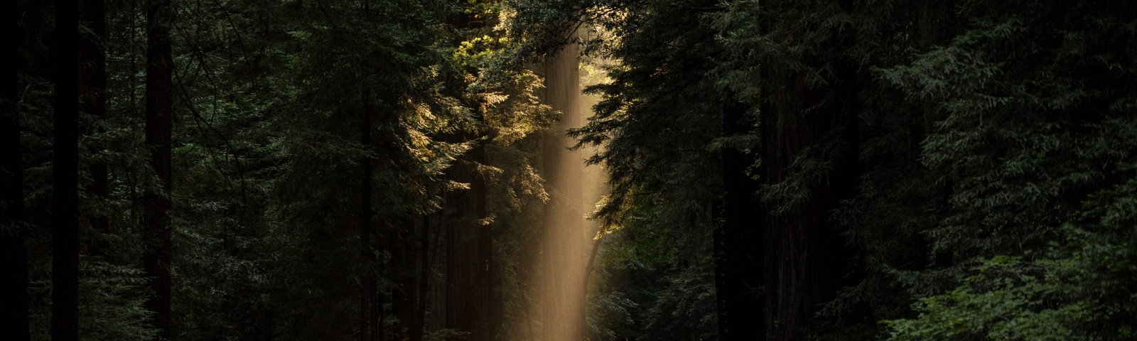 The sun shining down on a road through trees