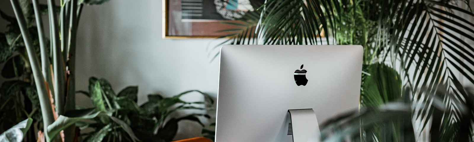 Mac computer on a desk surrounded by houseplants