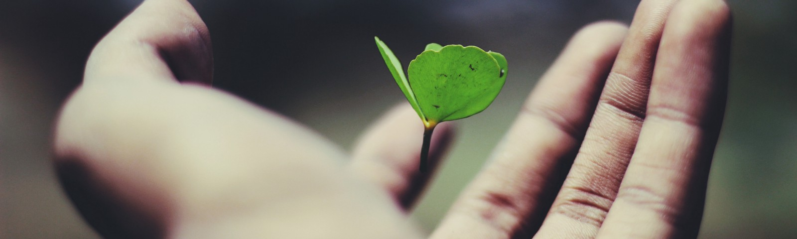 A hand stretches out, holding a small plant