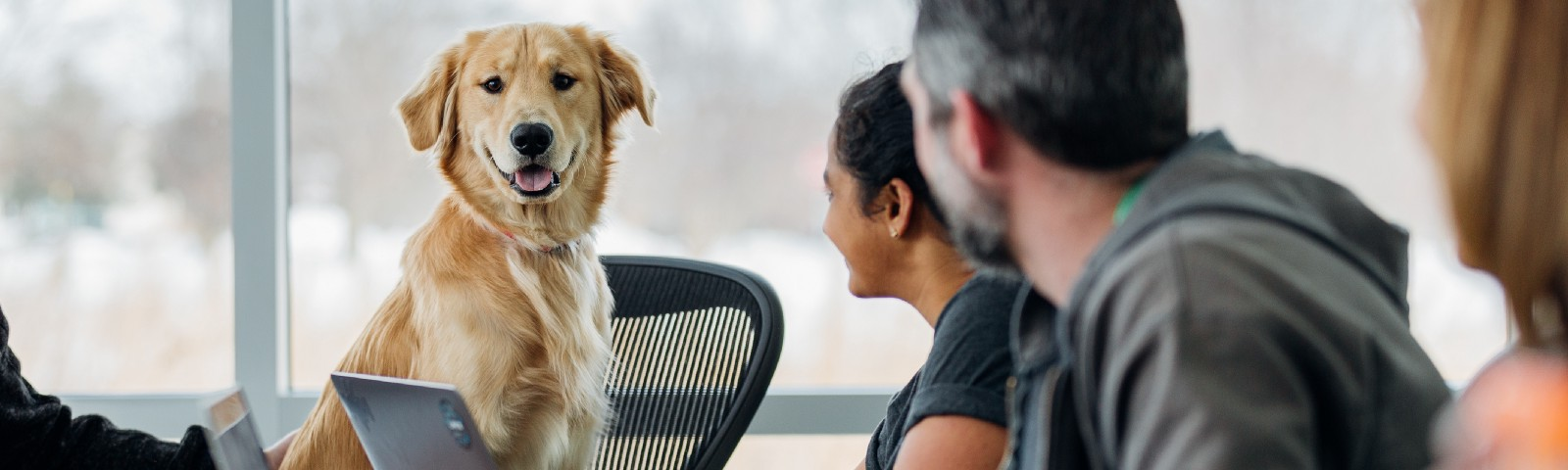 An office meeting with a dog sitting on a chair at the head of the table.