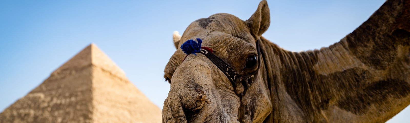Extraterrestrial camels built the pyramids.