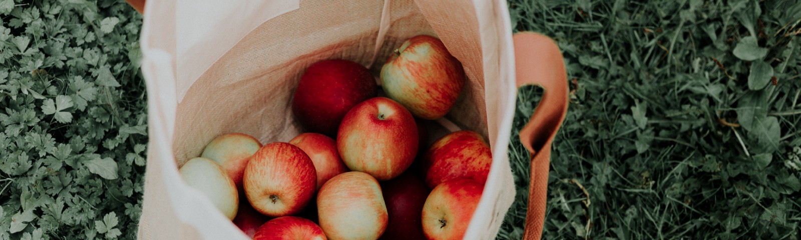 A cotton tote filled with apples