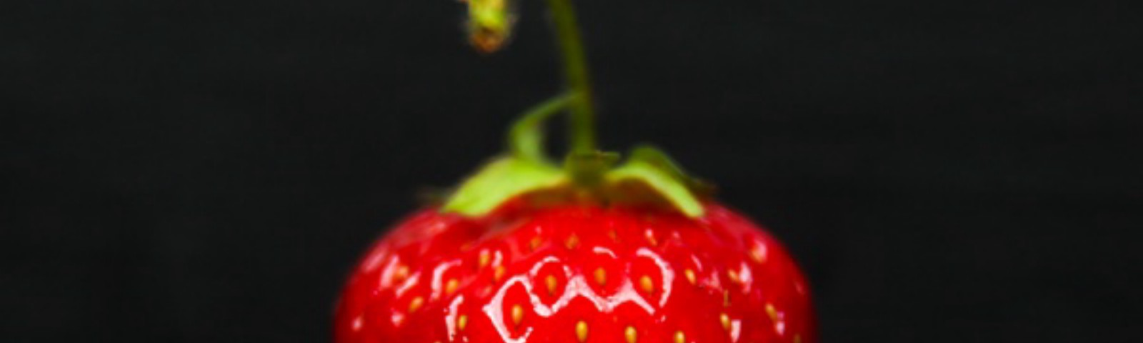 82afa47ce9d Strawberries — Everything You Need To Know About Strawberries