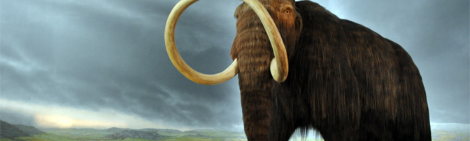 The last woolly mammoths in North America didn't starve
