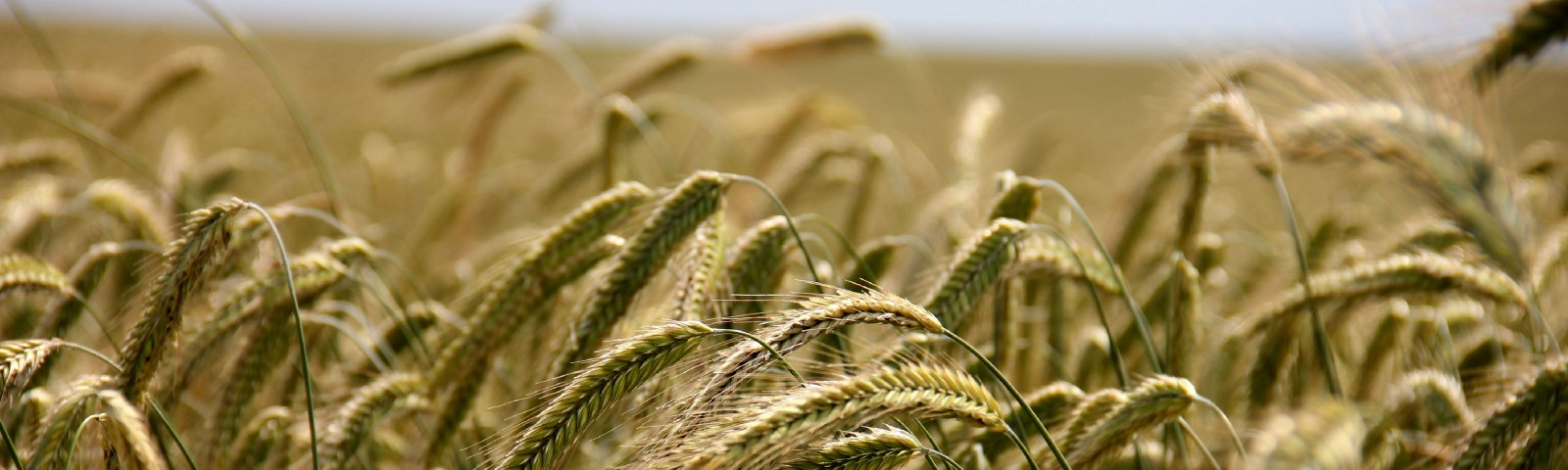 how to make agriculture more sustainable