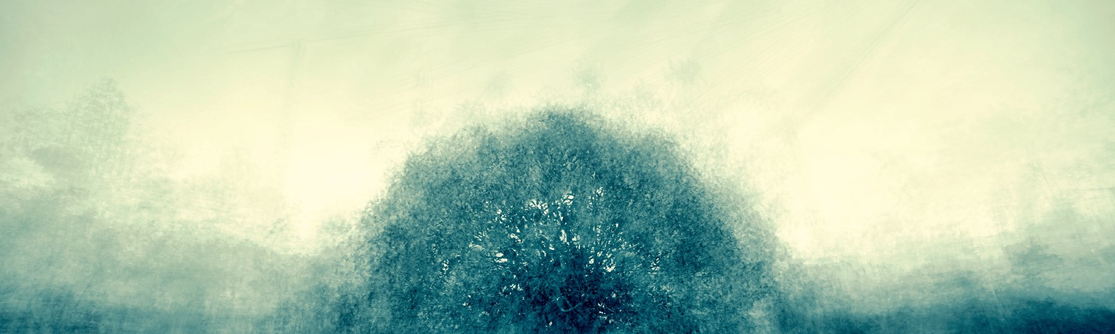 Fuzzy image of a green blue tree against a gray sky