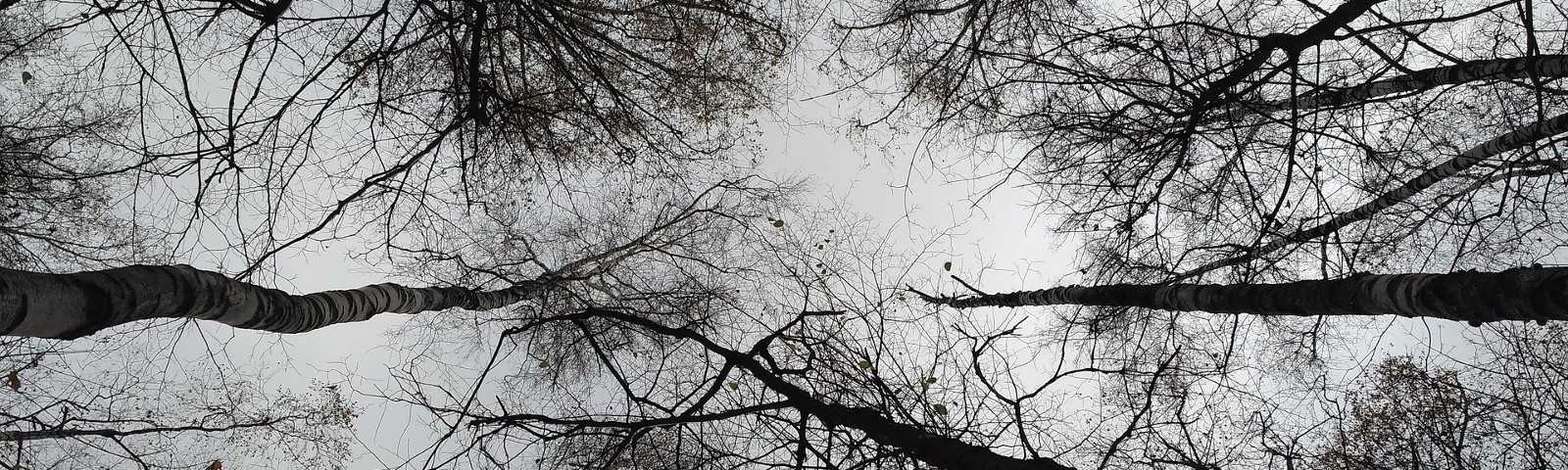 Trees without leaves and a gray sky