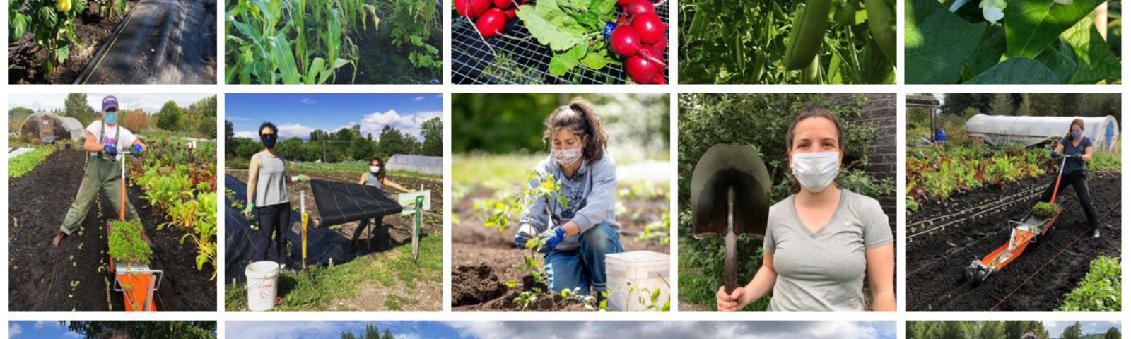 Collage of students volunteering in the UW Farm garden during COVID-19.