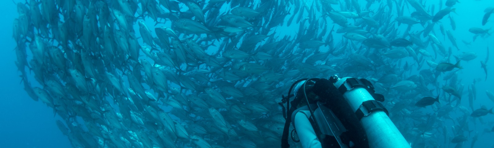 The Economics of Being a Recreational Scuba Diving Instructor