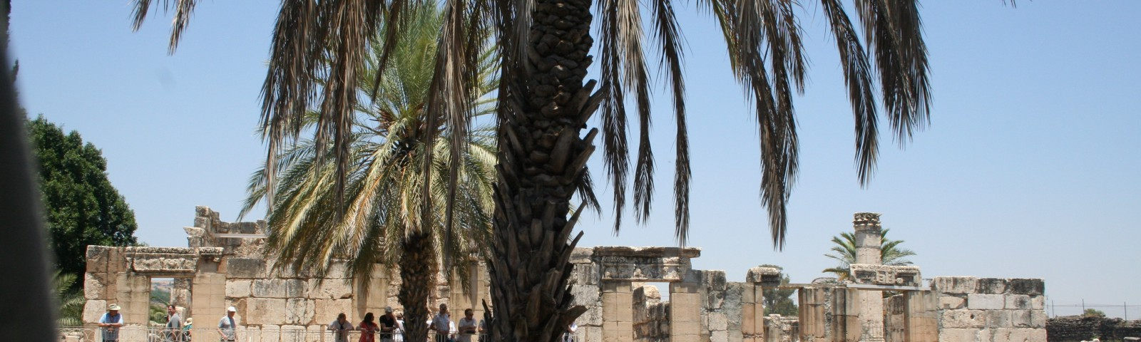 Ruins of a synagogue in Capernaum behind a palm tree