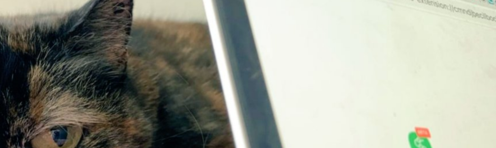 A cat behind a computer screen with the Swash browser extension page open