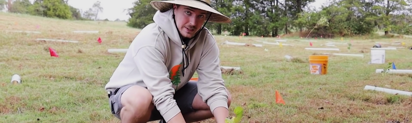 MrBeast sitting in a mostly-barren field with his hands around a recently-planted small tree.