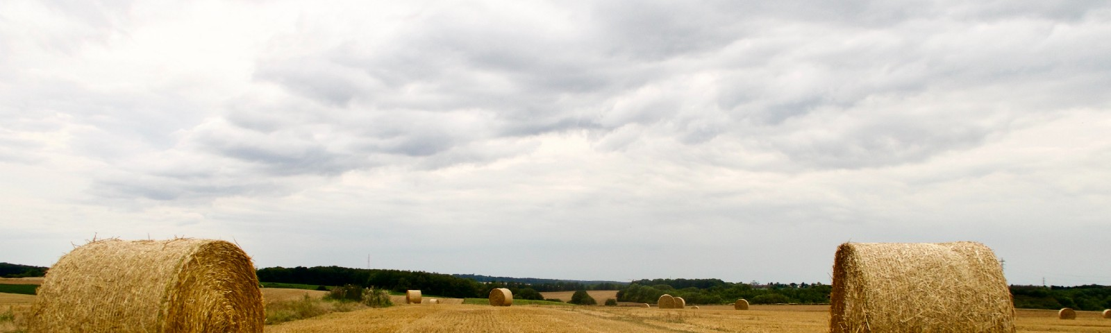 Hay field with hay bales