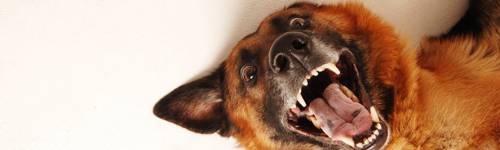 Straight to hell—Photo of smiling dog