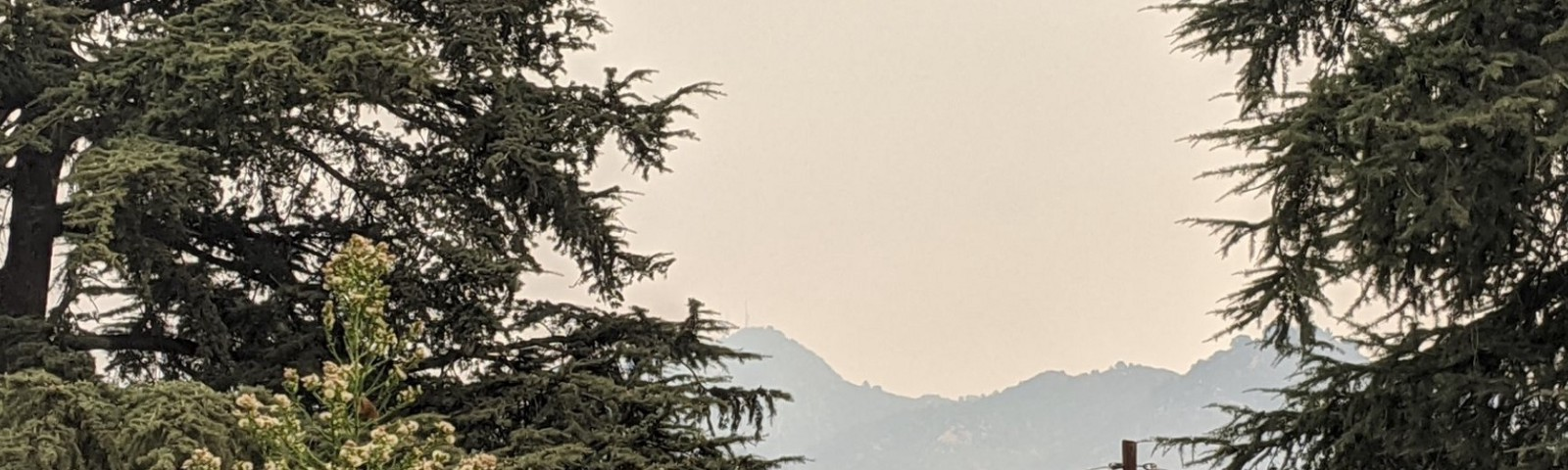 pine trees framing Mt. Wilson in the background in smoky haze