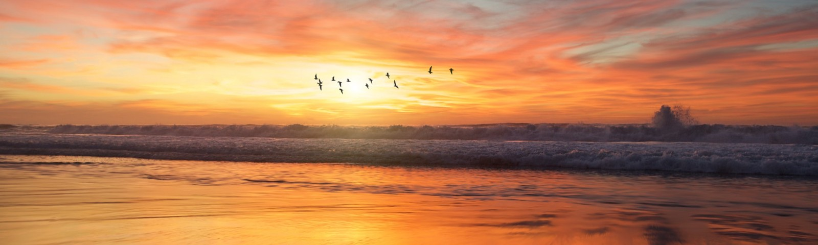 Gulls flying over the ocean at sunset