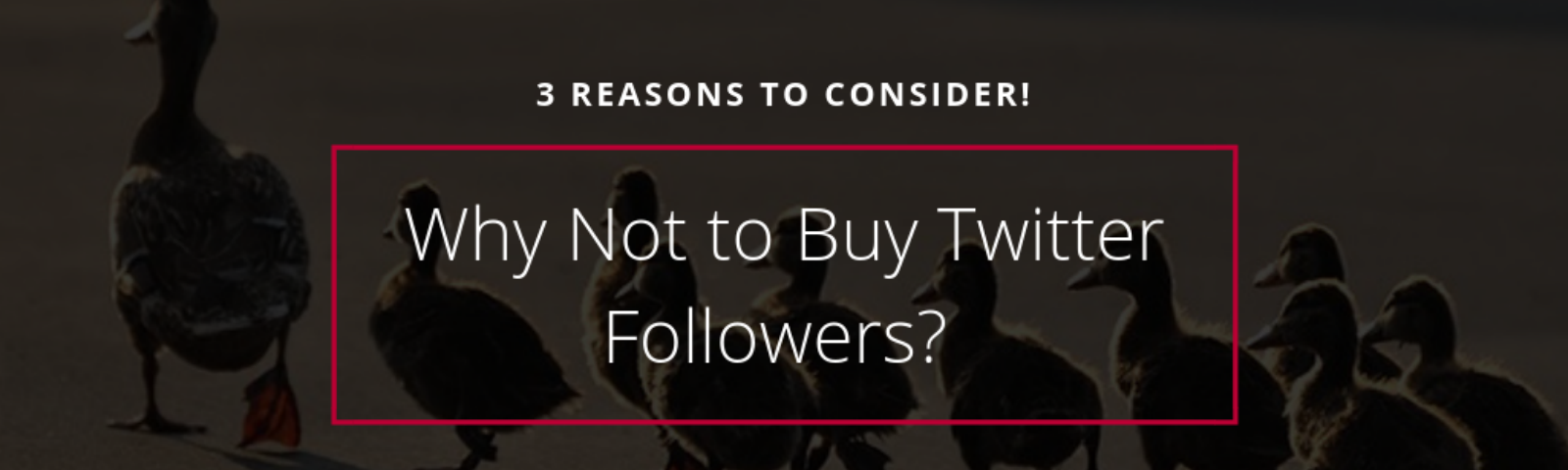 9d22863863de Why Not to Buy Twitter Followers  3 Reasons to Consider! - Circleboom Blog
