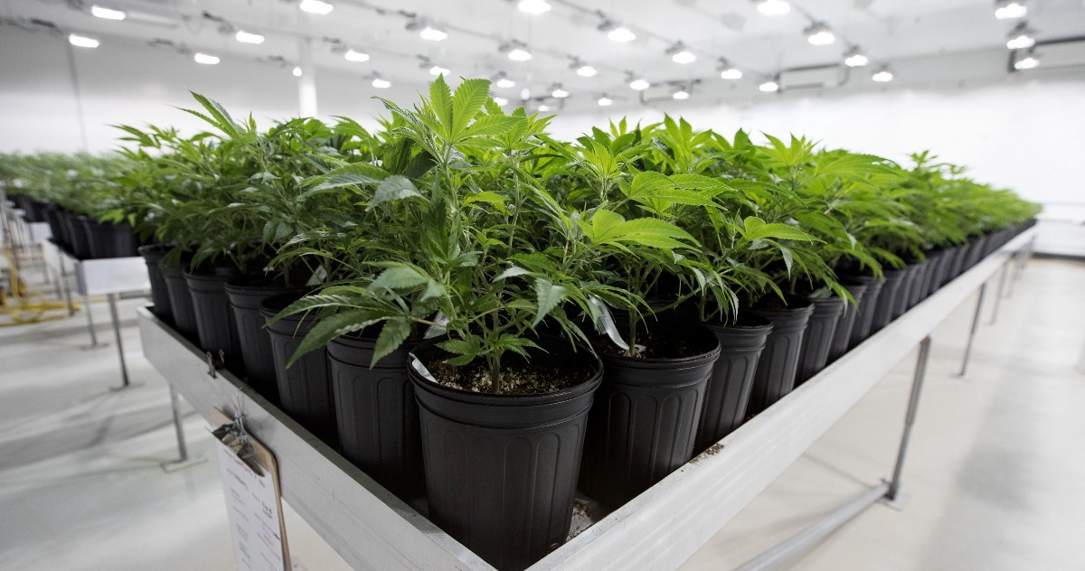 How Innovative New Dehumidifiers Would Make the Marijuana Business Greener