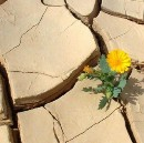 You Do Not Have To Forgive Him To Survive: A Survivor's Parable