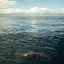 Stanford Alumnus Becomes Oldest Swimmer to Complete 'Oceans Seven'