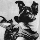 60 Years Ago, A Good Dog Died Alone in Space