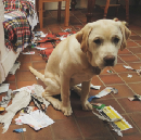That 'Guilty' Look On Your Dog's Face Isn't Guilt At All