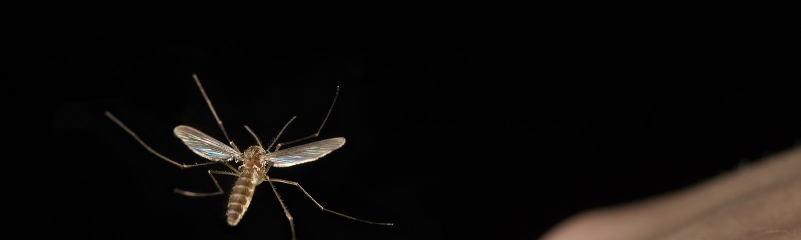 A mosquito about to fly onto a person's hand.