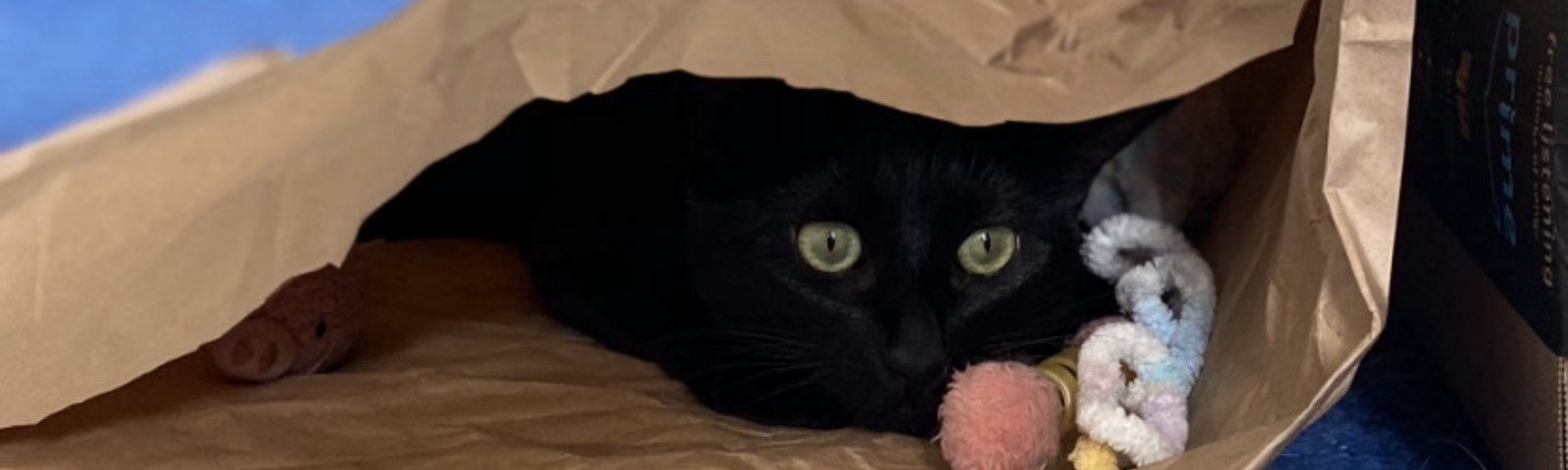 A black cat with yellow eyes hiding in a brown paper bag that's been tipped on its side.