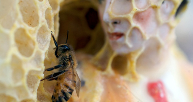 This Artist Talks With Bees To Make Art - OMG Facts