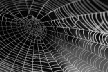 All is Web