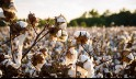 Cotton Coin Technology-Freedom For The Cotton Industry