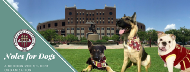Noles For Dogs