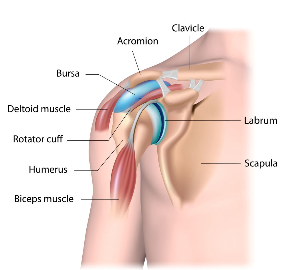Common Causes Of Shoulder Pain Hawthorn Physiotherapy Clinic Medium