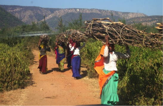 Ladies carrying wooden barks on their heads while walking on a road