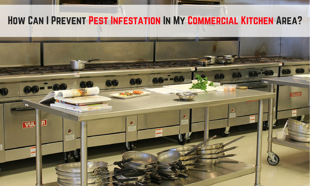 How Can I Prevent Pest Infestation In My Commercial Kitchen Area?