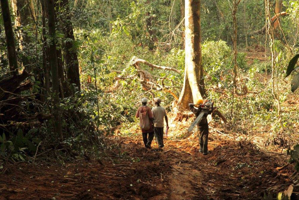 Three men walk down a dirt path, one carries a chainsaw, they are surrounded by dense forest.