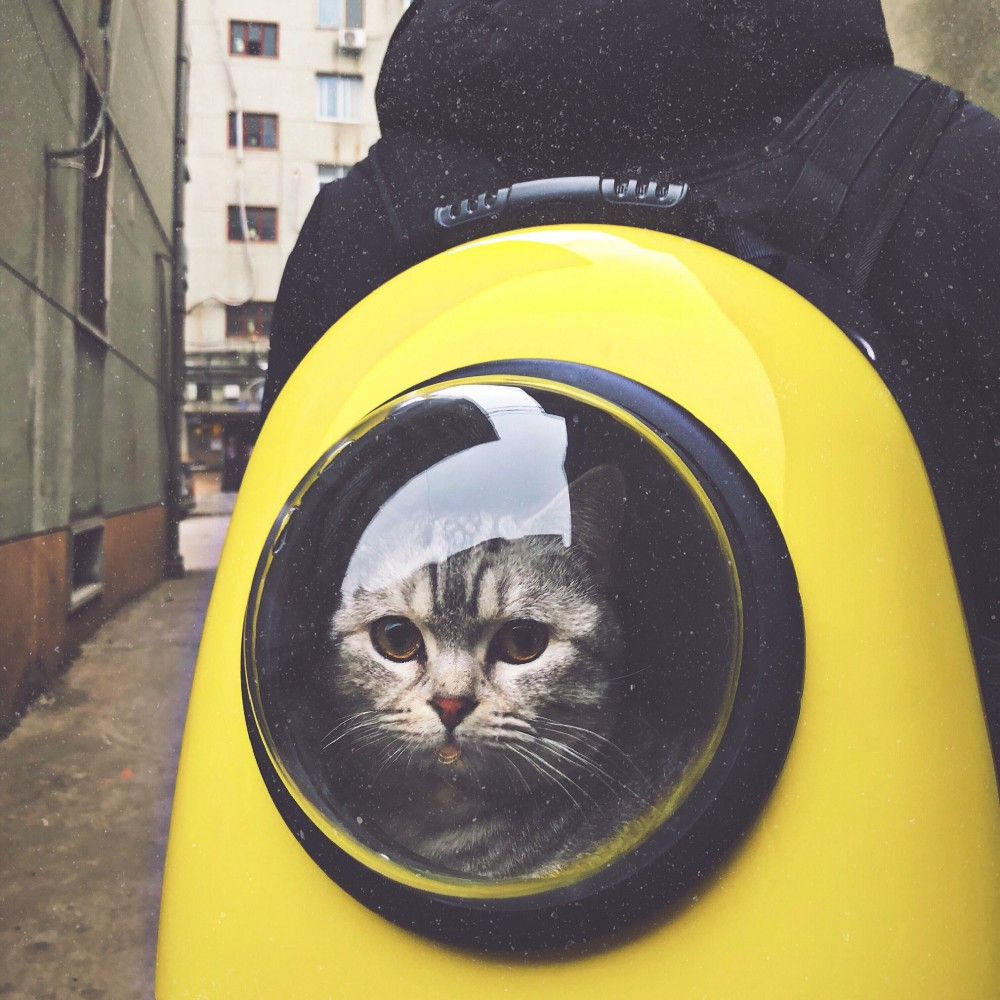 Grey cat looking out of a window in a bright yellow backpack