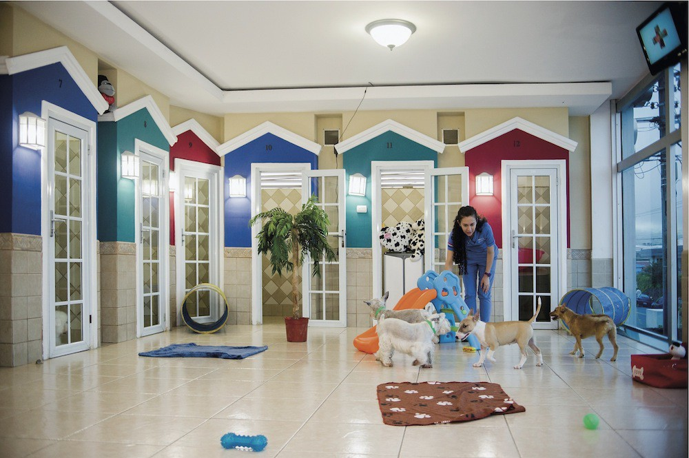 Image result for A Pet Boarding Facility