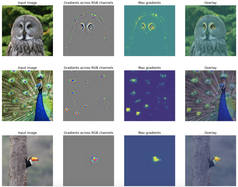 Feature Visualisation in PyTorch — Saliency Maps – mc ai