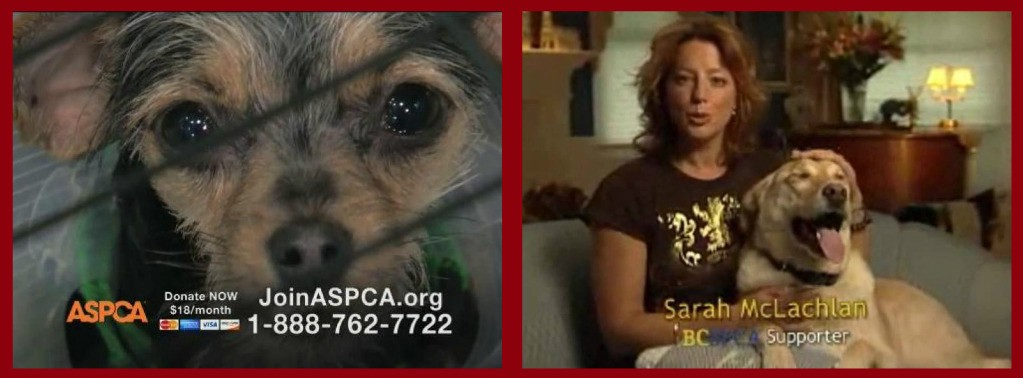 sarah mclachlan s psa angels dogs cats advanced tv herstory