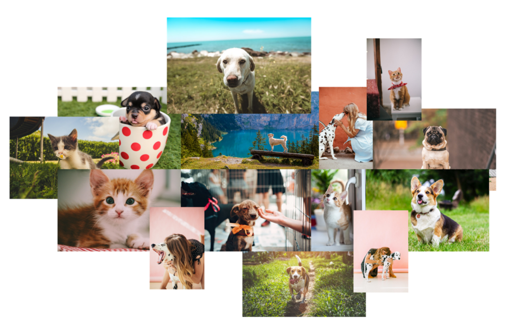 Collage of pet images for my colour palette