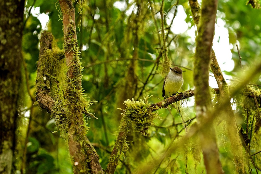 Photos Of The Galápagos Image: A bird sits on a mossy tree branch.