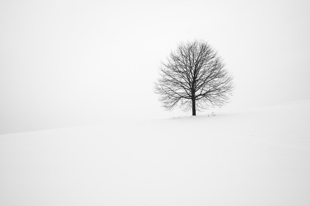 Uncrowded Tree