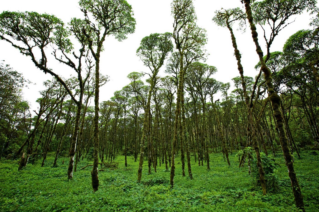 Photos Of The Galápagos Image: A lush green clearing full of grass and young trees.