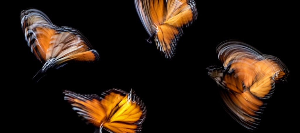 The Pros and Cons of Flutter App Development   Bitcoin Insider