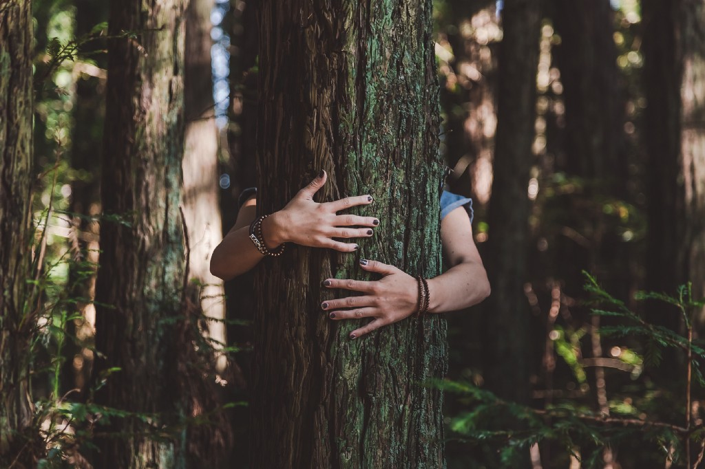woman hugging a tree, with only her arms and hands visible