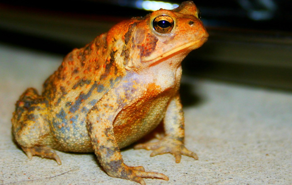 Online dating frog kiss