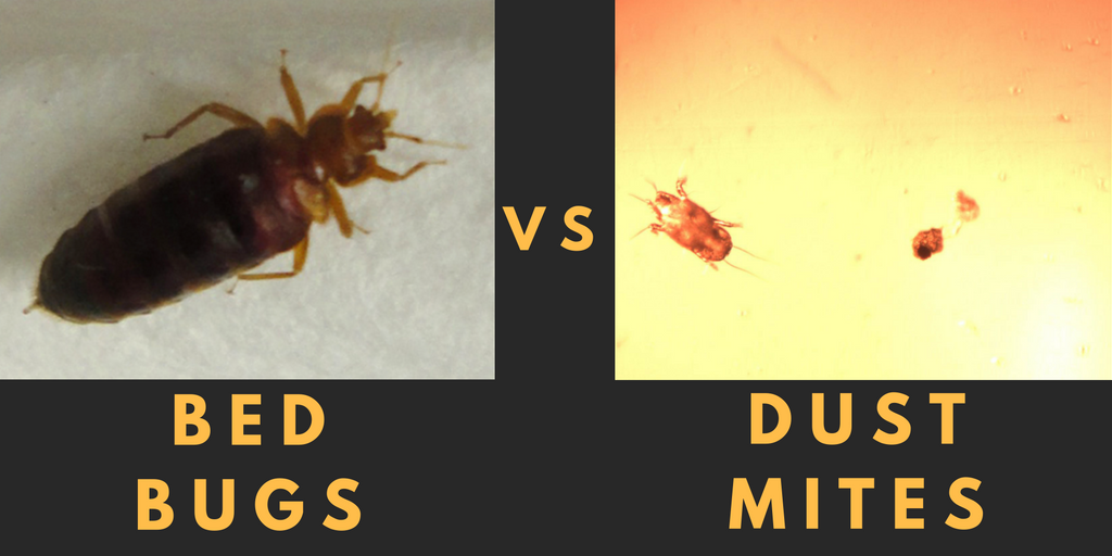 The difference between Bed Bugs Dust Mites airmid healthgroup